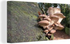 OneMillionCanvasses Canvas Schilderij Paddenstoelen - Een cluster paddenstoelen op een boomstronk Canvas - 160x80 cm - Foto print op Canvas schilderij (wanddecoratie woonkamer / slaapkamer)