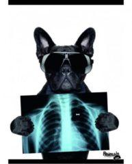 Nobrand Quadernoni A4 Funny Animals Medie e Superiori 10 pezzi