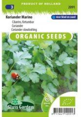 Groene Sluis Garden - Koriander Marino Biologisch (Coriandrum sativum)