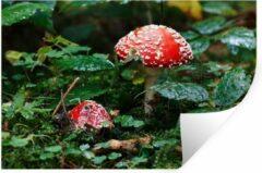 StickerSnake Muursticker Paddenstoelen - Close-up van een rood met witte paddenstoel - 60x40 cm - zelfklevend plakfolie - herpositioneerbare muur sticker