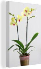 OneMillionCanvasses Gele orchideeën in een bloempot canvas 20x30 cm - klein - Foto print op Canvas schilderij (Wanddecoratie woonkamer / slaapkamer) / Bloemen Canvas Schilderijen