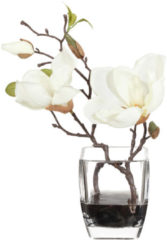 Magnolie im Glasgefäß Gasper Creme