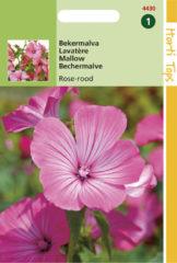 Rode Hortitops Zaden - Lavatera Trimestris Rose/Rood