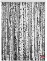 Seitenzugrollo, Lichtblick, »Klemmfix Dekor Birken«, Lichtschutz, Fixmaß, ohne Bohren