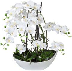 Orchideenarrangement Gasper weiß