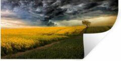 StickerSnake Muursticker Geel veld - Geel veld onder woeste lucht - 160x80 cm - zelfklevend plakfolie - herpositioneerbare muur sticker