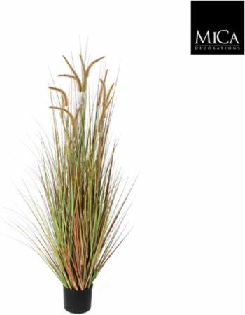 Afbeelding van Groene Mica Decorations Mica flowers pluimgras dogtail maat in cm: 120 in plastic pot