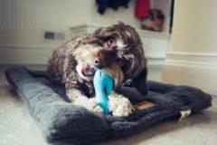 Blauwe West Paw Zogoflex Qwizl Interactief Honden Speelgoed Extra Sterk