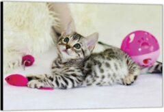KuijsFotoprint Dibond –Kitten met Roze Speelgoed– 90x60 Foto op Aluminium (Wanddecoratie van metaal)