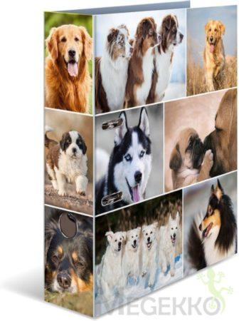 Afbeelding van HERMA 7165 Motief ordner A4 dieren - honden