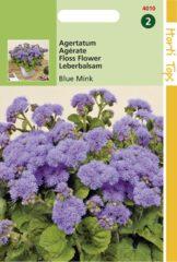 Blauwe Hortitops Zaden - Ageratum Houstonianum (Mexicanum) Blue Mink