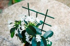 Groene Kamerplantenrekjes 37x23cm set a 2 stuks Nature