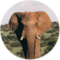 Beige Label2X Muurcirkel klein olifant - Ø 20 cm - Forex (binnen)