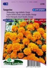 Sluis Garden Oranje lage dubbele Afrikaantjes bloemzaden – Tangerine