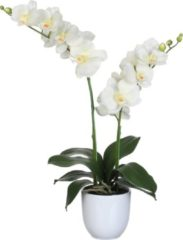 Edelman Dinxperlo Mica Decorations phalaenopsis creme in pot tusca wit (dia 12) maat in cm: 45 x 28 x 50 WIT
