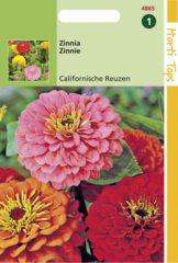 Roze Buzzy Seeds Hortitops Zaden - Zinnia Californische Reuzen gemengd
