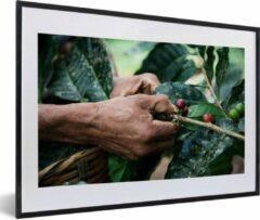PosterMonkey Foto in lijst - Een mens oogst de koffiebonen fotolijst zwart met witte passe-partout middel 60x40 cm - Poster in lijst (Wanddecoratie woonkamer / slaapkamer)
