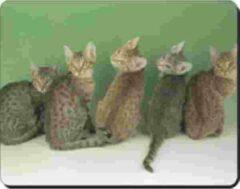 Advanta Ocicats Muismat