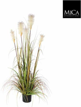 Afbeelding van Groene Mica Decorations Mica flowers - pluimgras foxtail maat in cm: 150 in plastic pot