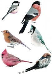 Grijze KEK Amsterdam muurstickers vogels (set van 6) (21x33)
