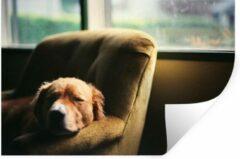 StickerSnake Muursticker Slapende honden - Hond slaapt in een stoel - 30x20 cm - zelfklevend plakfolie - herpositioneerbare muur sticker