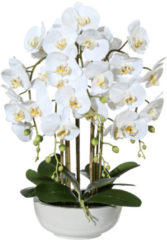Kunstpflanze Orchidee Gasper Weiß