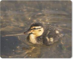 MousePadParadise Muismat Wilde eend - Leuke baby wilde eend zwemt in het water muismat rubber - 23x19 cm - Muismat met foto