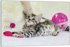 KuijsFotoprint Plexiglas –Kitten met Roze Speelgoed– 90x60 (Wanddecoratie op Plexiglas)