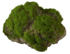 Aqua Della Decor Moss Stone Met Zuignap Large - Aquarium - Ornament - 17x11x13.5 cm