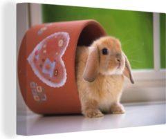 OneMillionCanvasses Canvas Schilderij Hangoordwerg - Baby hangoor dwerg in een bloempot canvas 2cm - 120x80 cm - Foto print op Canvas schilderij (wanddecoratie woonkamer / slaapkamer)