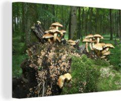 Groene OneMillionCanvasses Canvas Schilderij Paddestoelen op bomen - Groep paddenstoelen in het bos canvas - 90x60 cm - Foto print op Canvas schilderij (wanddecoratie woonkamer / slaapkamer)