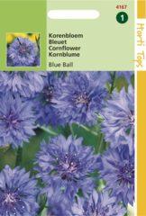 Blauwe Hortitops Zaden - Centaurea cyanus dubbelbloemig Blue Ball