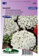 Sluis Garden Wit Zeeschildzaad Alyssum bloemzaden - Snowcloth