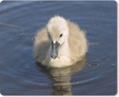 MousePadParadise Muismat Baby zwaan - Baby zwaan in het heldere water muismat rubber - 23x19 cm - Muismat met foto