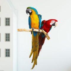 Plakkers Muursticker met twee papegaaien, Ara's