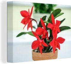 OneMillionCanvasses Rode orchidee in bloempot Canvas 80x60 cm - Foto print op Canvas schilderij (Wanddecoratie woonkamer / slaapkamer) / Bloemen Canvas Schilderijen