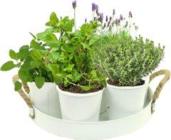 Baltus Herb Festival – 7 World of Tea (Wit)