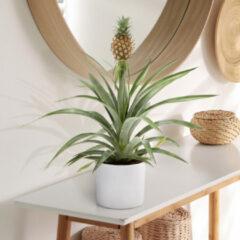 Groene WoonQ Ananasplant 'Ananas Comosus'