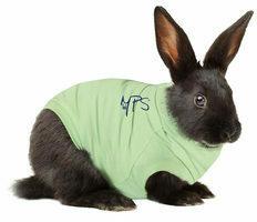 Groene Mps Medical Pet Shirt Konijn - M