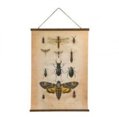 Xenos Vintage poster - insecten - 50x70 cm