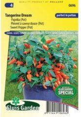 Oranje Sluis Garden - Paprika Tangerine Dream F1 (pot)
