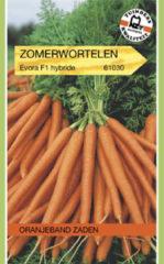 Oranjeband Zaden Oranjeband - Zomerwortel Evora F1