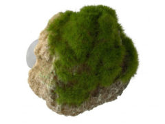 Aqua Della Decor Moss Stone Met Zuignap Small - Aquarium - Ornament - 12x9.5x10.5 cm