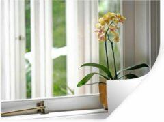 StickerSnake Muursticker Orchideeën - De orchideeën in een bloempot voor het raam - 80x60 cm - zelfklevend plakfolie - herpositioneerbare muur sticker