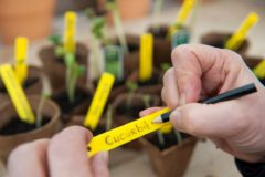 Nature 25x Moestuin/groentetuin/kruidentuin steeketiketten 10 cm - Moestuin labels 25 stuks - Tuin artikelen