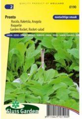 Groene Sluis Garden - Rucola Pronto (Eruca sativa)