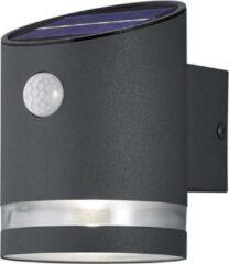 Antraciet-grijze Trio Leuchten sal - Wandlamp met sensor op zonne-energie - 1 lichts - D 12 cm - Antraciet