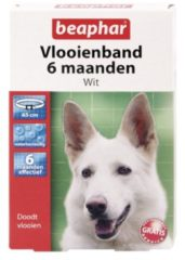 Beaphar Vlooienband 6 Mnd Hond 65 cm - Anti vlooienmiddel - Wit