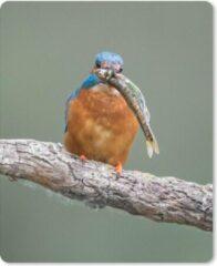 MousePadParadise Muismat Baby Dieren - Ijsvogel met prooi muismat rubber - 19x23 cm - Muismat met foto
