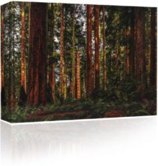 Sound Art - Canvas + Bluetooth speaker Trees In The Forest (41 x 51cm)